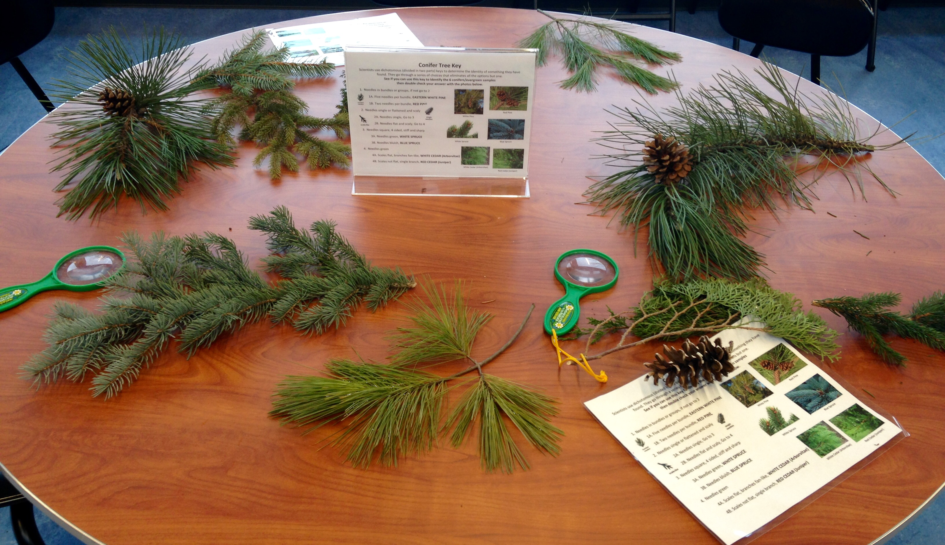 Don't Miss our free All About Evergreens Day
